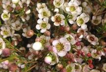 Blomsterliste snittblomster