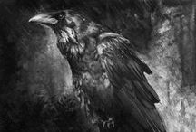 Rooks, Ravens and Crows