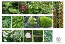 Planting Moodboards / A collection of planting mood boards for varying clients