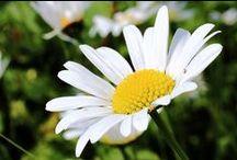 Pflanzen, Blüten & Co.