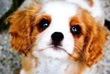 Pet Tips & Ideas / Love me a furry friend!