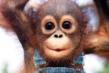 Too cute!!