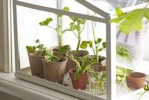 Urban Garden / Ideas for growing without a garden (container garden)