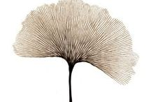 botanic art / botanic art