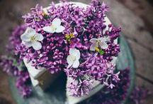 Esküvői tortacsodák / Wedding cake / Mit is mondhatnánk? Beszéljenek inkább a képek. #eskuvoitorta #eskuvo #weddingcake