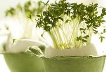 green botanical style / interiors styles