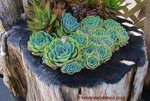 plantes i jardins