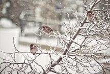 Zima ❄️