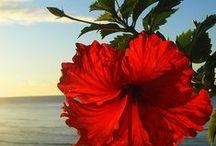 różne kwiaty / Kwiaty są pięknymi słowami i hieroglifami natury, którymi daje nam ona poznać, jak bardzo nas kocha.