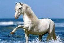 Animals :)