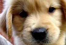 Puppy Love / by Hailey Dunn