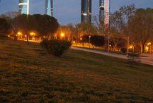 Madrid / Madrid, sus calles, sus plazas, sus cafés y sus edificios.