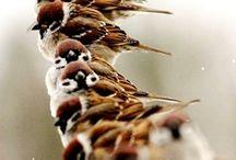 Creation-Bird-Inspiration / by Liz Ronning