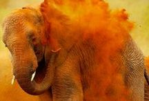 Wonderous Elephants / Family oriented, intelligent, huge and sensitive describes why they are one of my favorite animals.