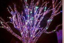 Holiday Lighting / Seasonal Source Products