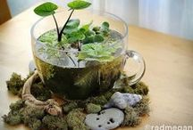 LLL Water Features for Miniature Gardens / Ponds, rivers, streams, lakes, waterfalls, fountains and other water features for miniature gardens. Fairy Gardens, Mini Gardens, Gardening. / by Lush Little Landscapes