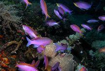Marine life / Marine life