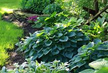Gardening & Outdoors... / by Lillian Dias