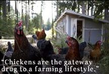 Livestock - Chickens / by Cheryl Nash