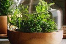 Big Bad Ways to Garden Inside / Fabulous ideas to keep gardening -- indoors!