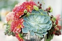 Big Bad Weddings / Everyone loves a plant-filled wedding! Let us inspire you -- AND -- help with the plants! See our big bad succulent varieties here: http://bigbadflower.com/marketplace/succulents