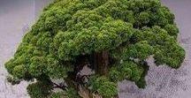 BonsaiTrees
