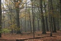 Natuur en weer / Wildernis (natuur) - de oorspronkelijke, onaangeroerde verschijningsvorm van alles wat zich op, in en rond de Aarde bevindt (bron: Wikipedia )
