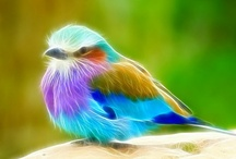 Colorful Birds / by Wendy Liang