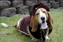 Lets Dress Up-Costumed Dogs and Cats