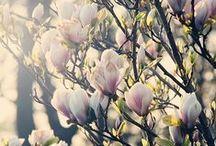 Blooms / nature's art work