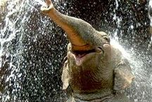 Elephants / Never forgetting xxx / by Sarah Sproston