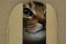 Kittylove / Cats