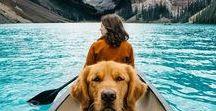 Travel with Pets / Travel with pets dog, travel with pets cat, travel with pets on a plane, travel with pets in a car, travel tips for travel with pets.