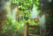 Go green! / plants, flowers, balcony, garden