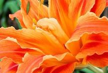 Orange crush / Beautiful photos is shades of orange.