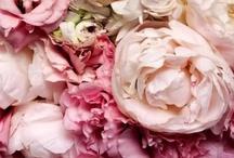 Pink, my favorite