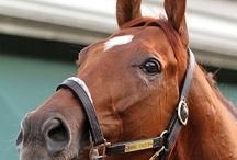Equestrian / by Morgan Roose