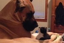 Cats, Dogs & Animals / by Susan Madrigal