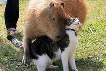 zwierzęta,które znamy