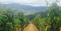 Things to Do and See in Napa Valley