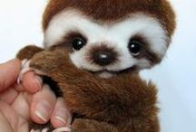 Cute Things & Animals / A board to feed your cute aggression.