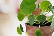 PLANTS & GARDEN - JARDINAGE / Plantes d'intérieur, de terrasse, jolis jardins