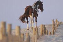 horses / by ShiAnne Boehm