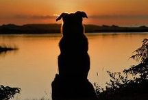 Sunrise and Sunset / Pets are always wonderful but there's something magical about catching their picture near sunrise and sunset.