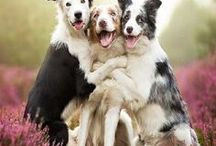Pets Make Us Smile