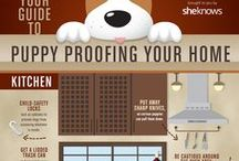 Pet Infographics / Everything about pets in infograph form.