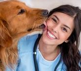 The Doctor Is In / Information related to veterinarians who help keep our lovable pets healthy and happy.