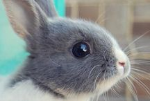 Bunny / I have always wanted a bunny and I will always have a rabbit.