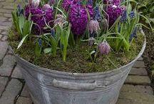 Gardening & stuff  / How to grow, organize, compost, live, raise gardens.