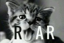 I adore cats